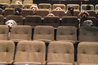 В Канаде служебных собак отвели на просмотр мюзикла