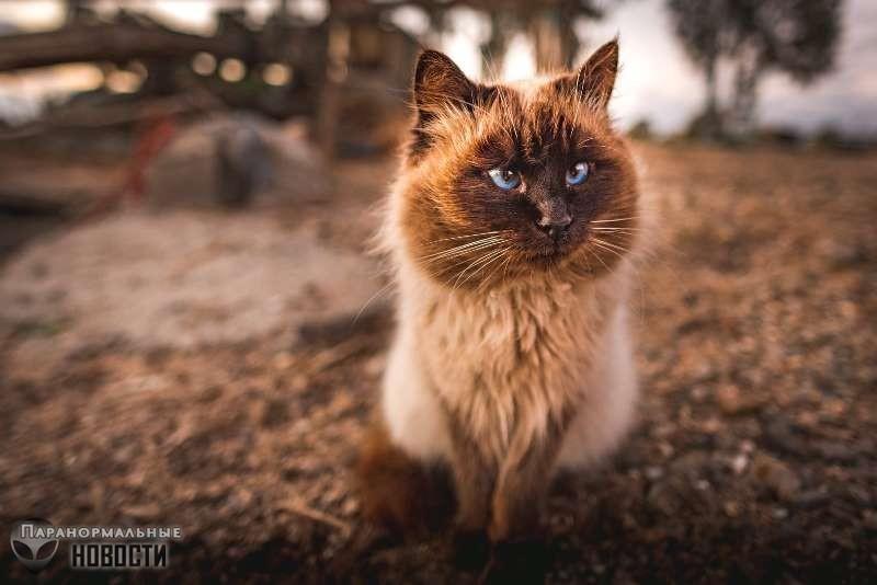 Странная история о коте по кличке Мистер Дживс | Привидения | Паранормальные новости