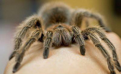 Гигантский паук заполз на объектив камеры прямо во время трансляции (видео)