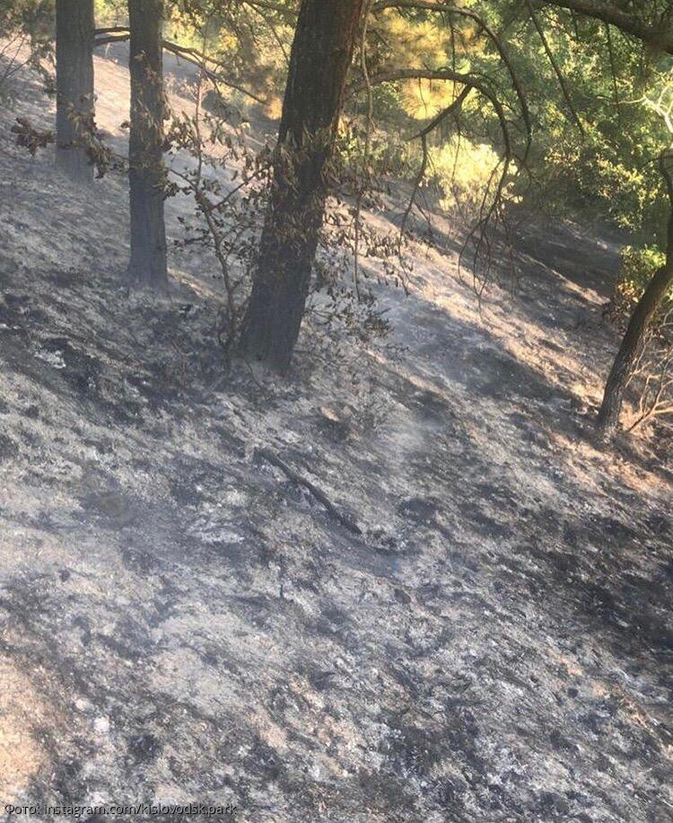 Устроившего пожар в Национальном парке «Кисловодский» человека сняли на видео