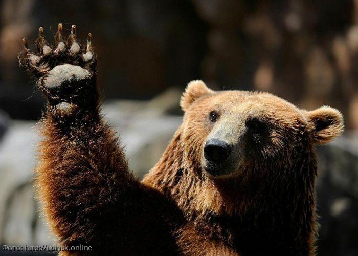 Жители Камчатки рассказали о новом способе защиты от медведей