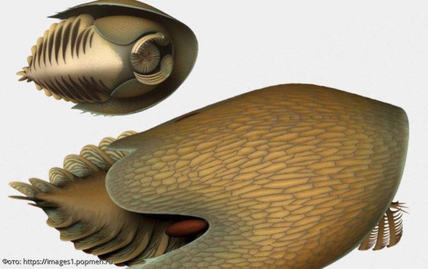 Ученые обнаружили древнее хищное существо, проживавшее 500 млн лет назад