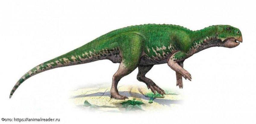На Кузбассе нашли останки растительноядного динозавра
