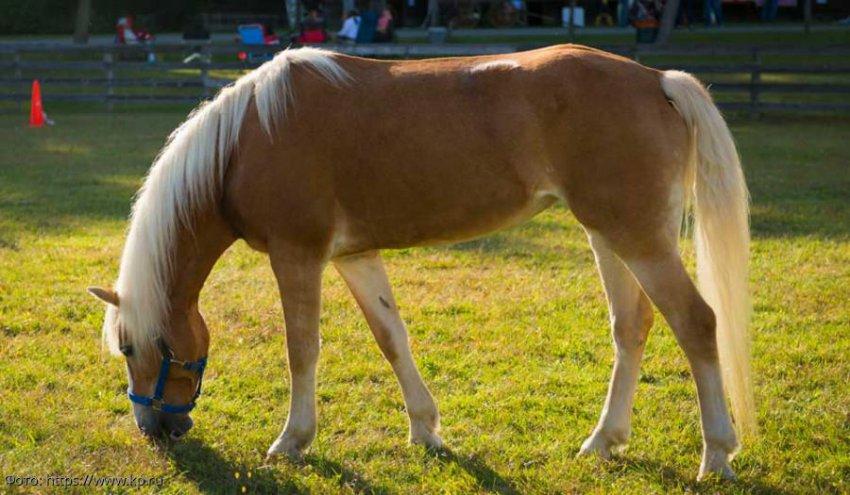 Если снится лошадь: толкование по различным сонникам