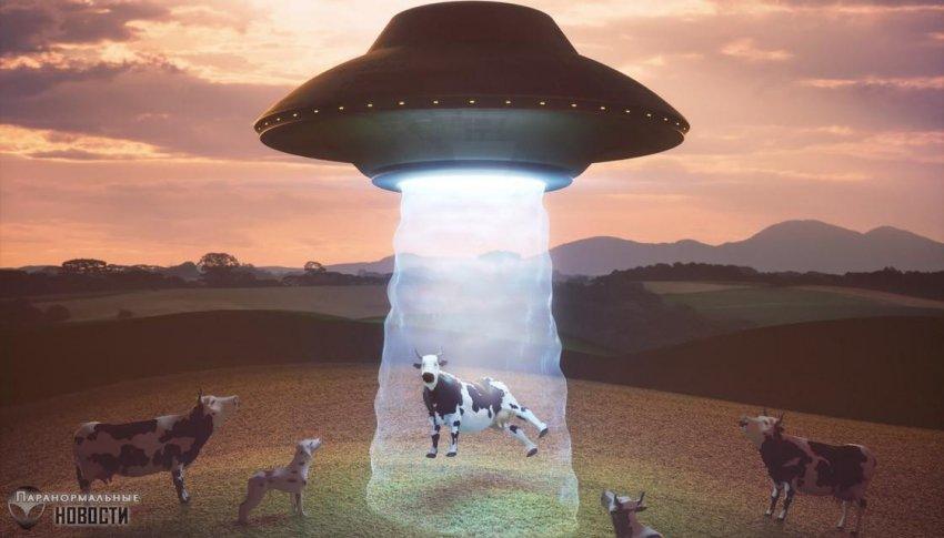 Теленок пропал с фермы, а когда нашелся через 4 дня, то люди ужаснулись его виду (18+) | Загадки планеты Земля | Паранормальные новости