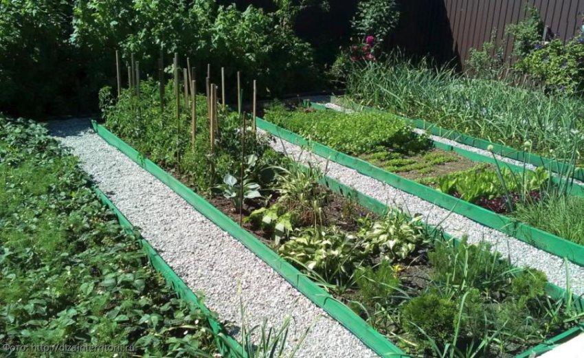 Лунный календарь садовода-огородника с 5 по 11 августа