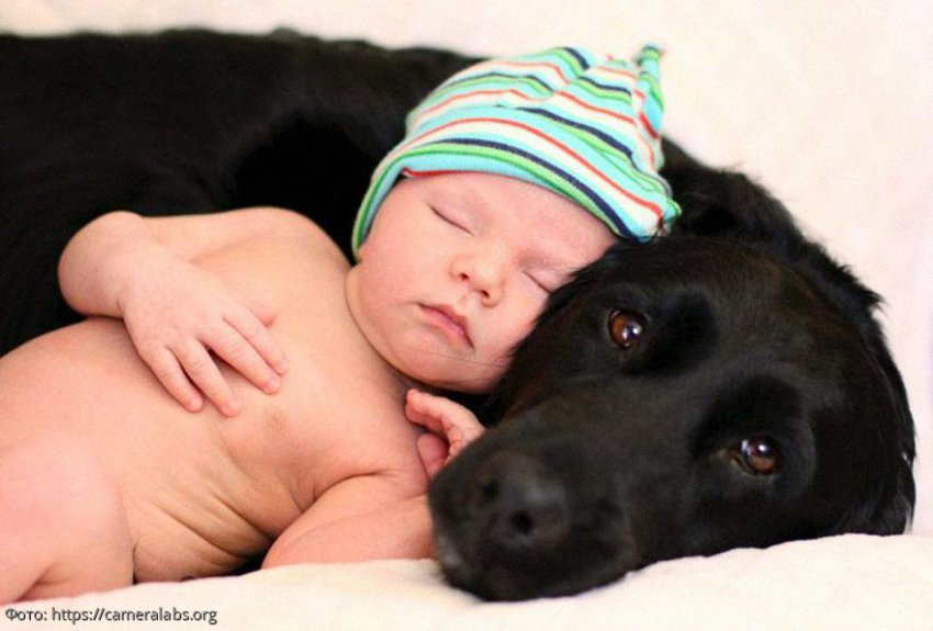 10 трогательных фотографий, на которых такие большие собаки и такие маленькие дети
