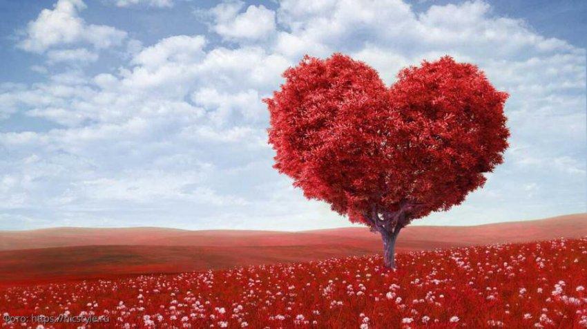 Любовный гороскоп на 7 августа