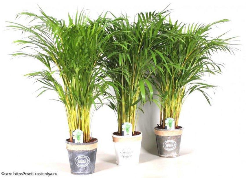 6 растений, которые сохранят прохладу в доме круглый год