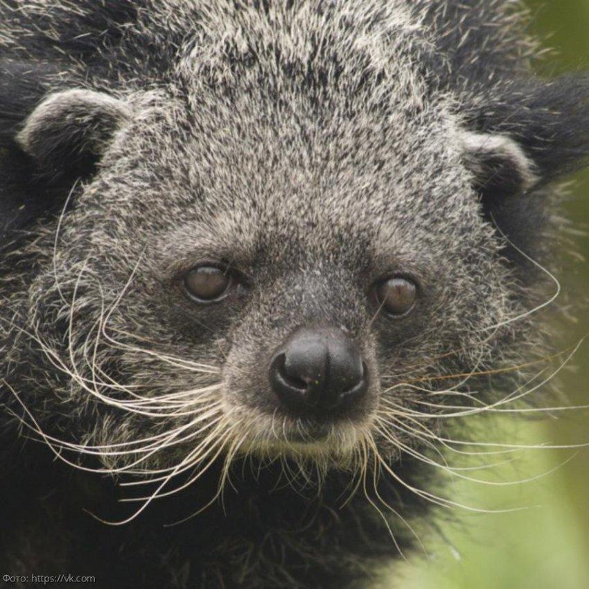 В Московском зоопарке появился медведь, похожий на кошку