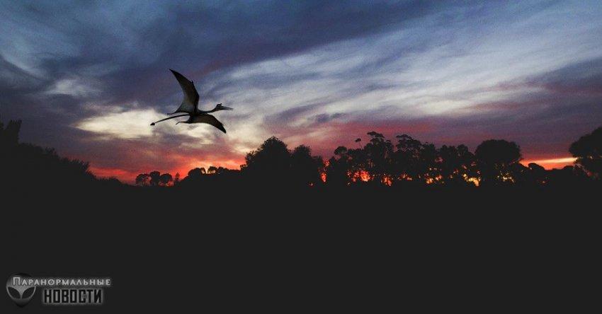Семья из Чикаго увидела летающего птерозавра | Загадочные существа | Паранормальные новости