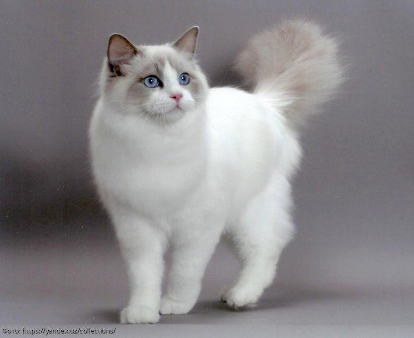 Правила поведения, которые заставят кошку вас полюбить