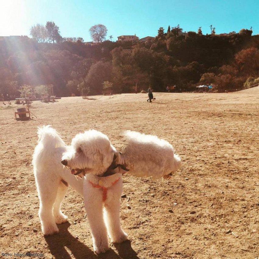 9 панорамных снимков, на которых собаки неожиданно превратились в инопланетных монстров