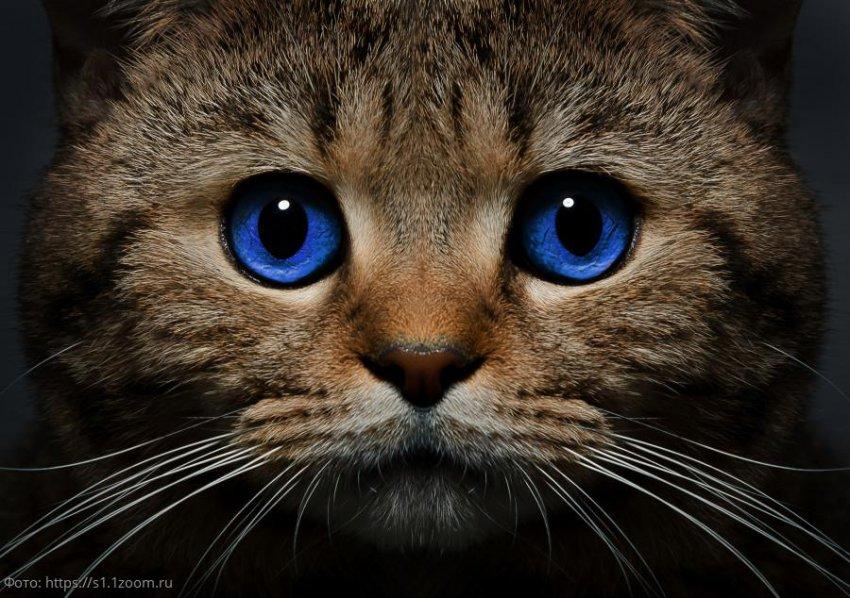 10 любопытных фактов о кошках, которые большинство людей может не знать