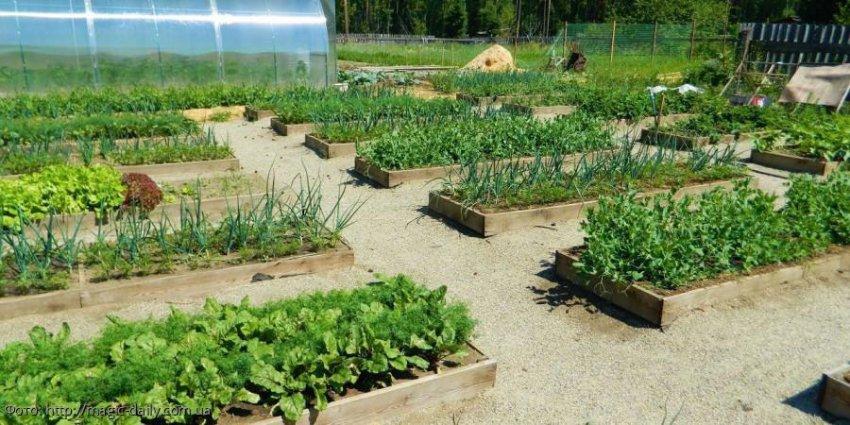 Лунный календарь садовода-огородника с 12 по 18 августа