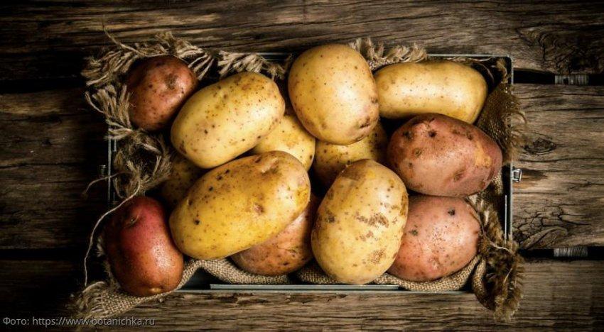 7 признаков плохого молодого картофеля