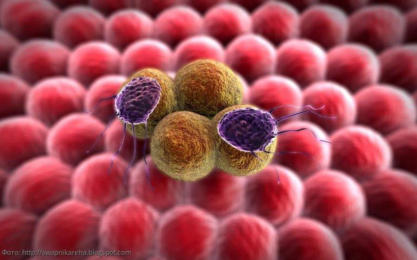 Медики назвали продукты, убивающие раковые клетки