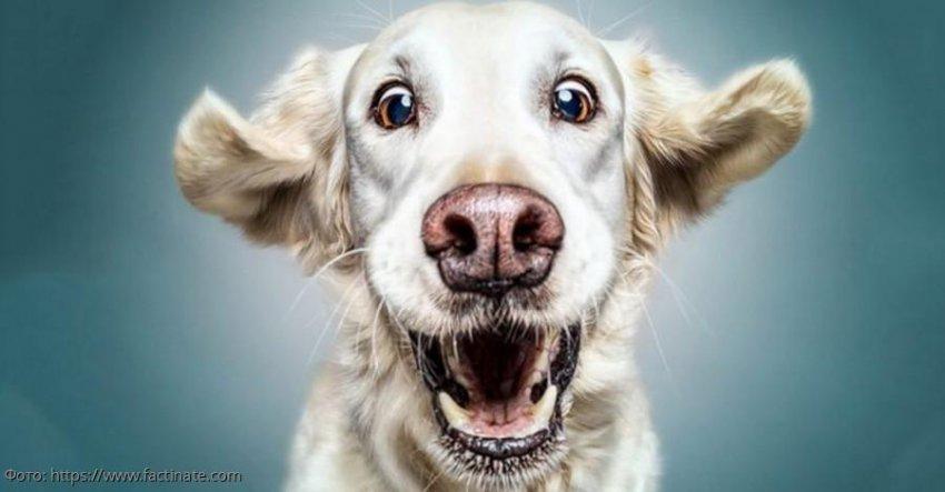 5 признаков, что собака вас любит