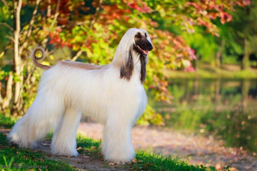 Породы собак с необычной внешностью