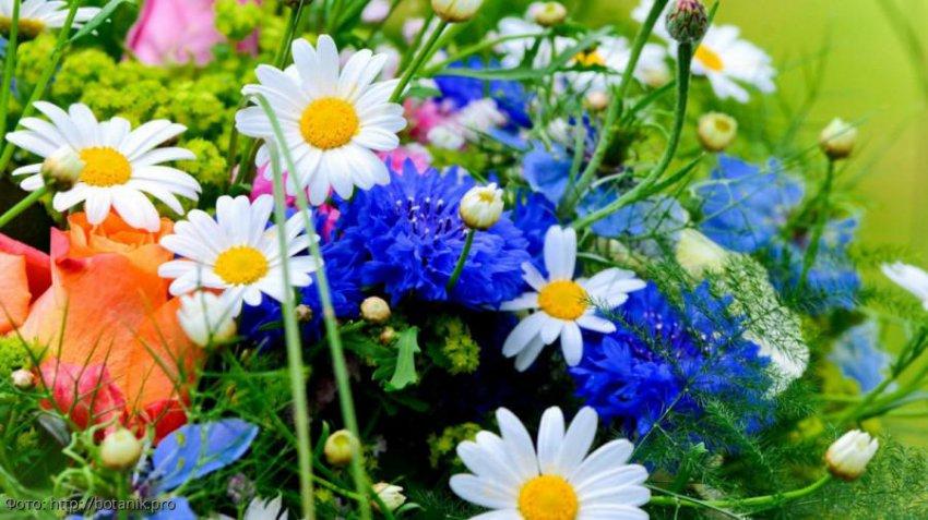 Лунный календарь садовода-огородника с 19 по 25 августа