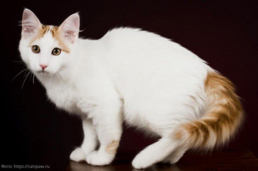 Породы кошек, о которых почти ничего неизвестно