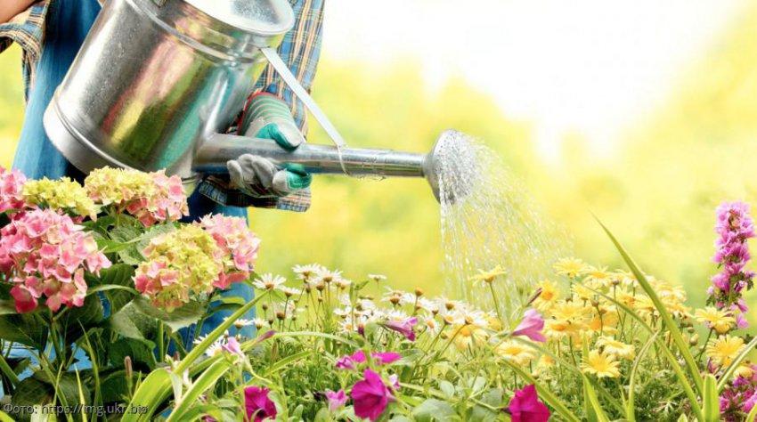 Лунный календарь садовода-огородника с 26 августа по 1 сентября