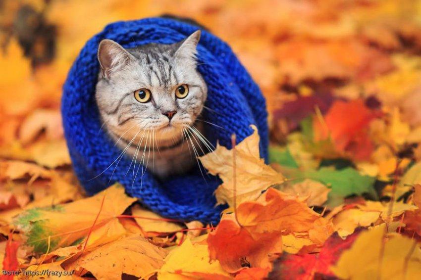 Осенний гороскоп от Василисы Володиной: какую опасность таят в себе осенние месяцы