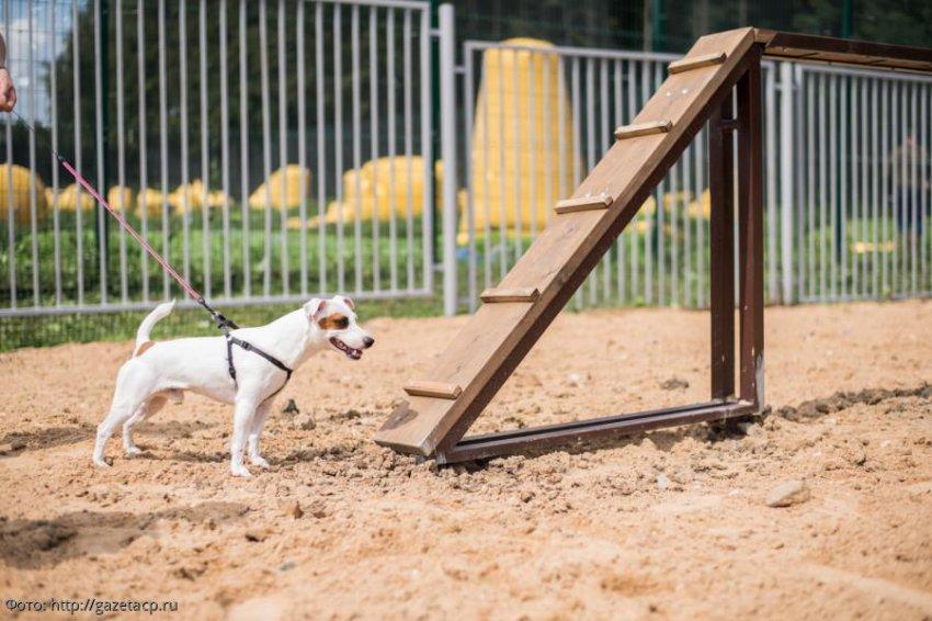 В Москве появляются удобные площадки для выгула собак