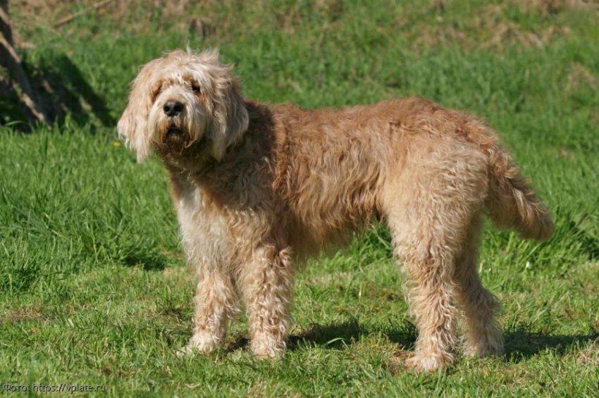 5 необычных пород собак, которые мало кому известны