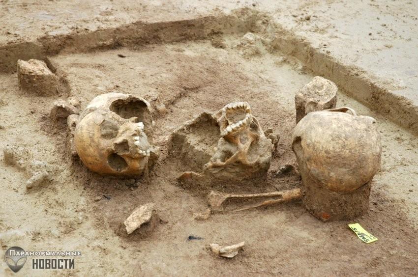 Загадка массового каннибализма на территории Германии 7 тысяч лет | Древний человек | Паранормальные новости