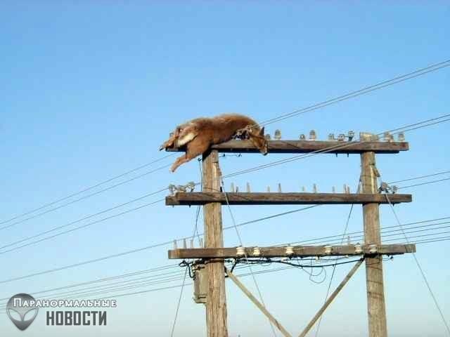 Как он туда попал? Загадка мертвого оленя на верхушке столба | Загадки планеты Земля | Паранормальные новости