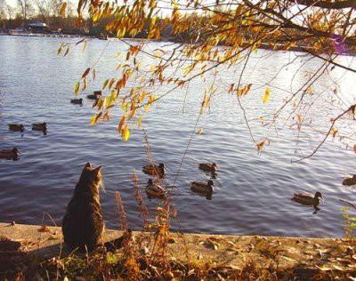 Синоптики заявили, что в России холодное время года сокращается