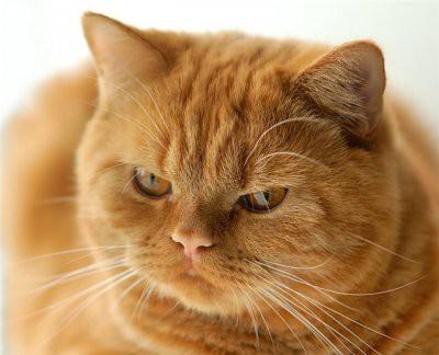 Названы кошки, которые притягивают в дом деньги, счастье и любовь