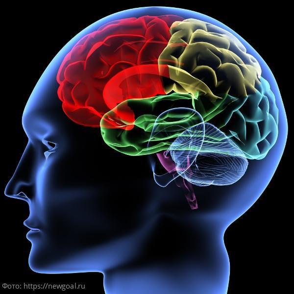 Способы улучшения памяти, действенность которых доказана научно