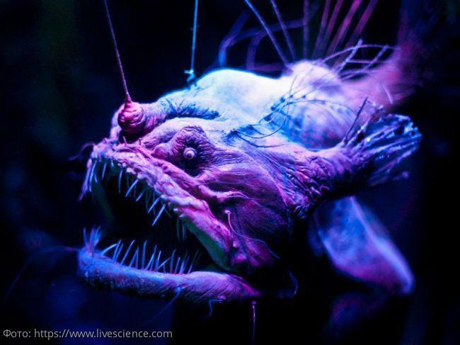 Жизнь в темных глубинах: 10 глубоководных существ, способных напугать своим устрашающим видом