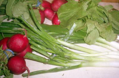 Ревматолог рассказала, какие продукты помогут восполнить дефицит кальция