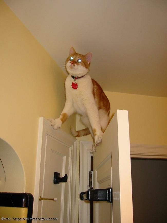 10 смешных фото кошек, которые пожалели о том, что сделали