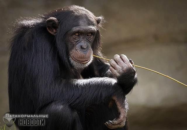 Жителей техасского городка терроризирует загадочная большая обезьяна | Загадочные существа | Паранормальные новости
