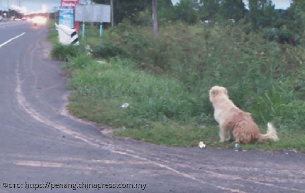 Выпавший из машины пёс четыре года ждал хозяина у обочины и дождался