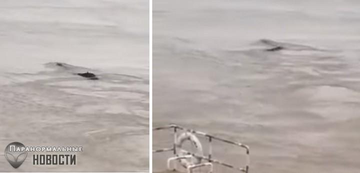 В Китае сняли на видео загадочное длинное существо в реке | Загадочные существа | Паранормальные новости