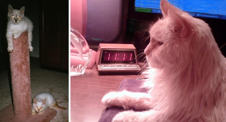 Мужчина сфотографировал призрак своей кошки | Привидения | Паранормальные новости