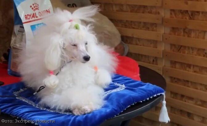 В Москве прошел фестиваль Breed's day, посвященный защите животных