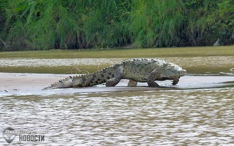 Загадочный 6-метровый крокодил убивает людей в Бурунди | Загадки планеты Земля | Паранормальные новости