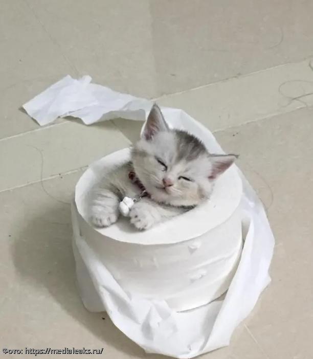 10 фото милашных котиков, которые сделают этот осенний день чуточку теплее