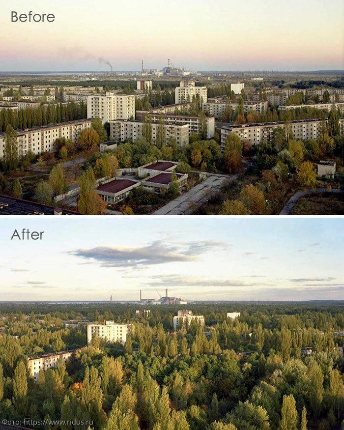 10 фото из Чернобыля, доказывающих, что природа всегда побеждает цивилизацию