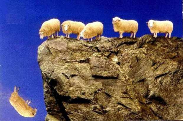 Почему овцы совершают массовые самоубийства