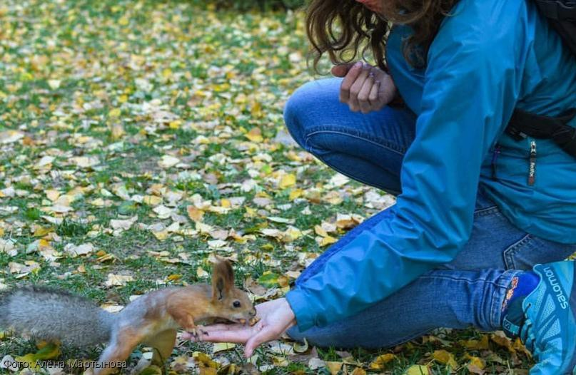 В Новосибирске фотографа покусала белка
