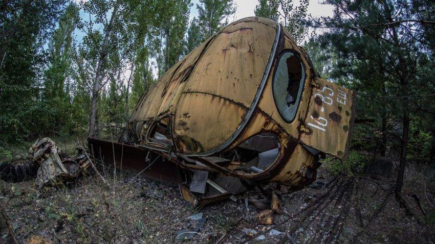 Мутанты в Чернобыле: есть ли они там на самом деле
