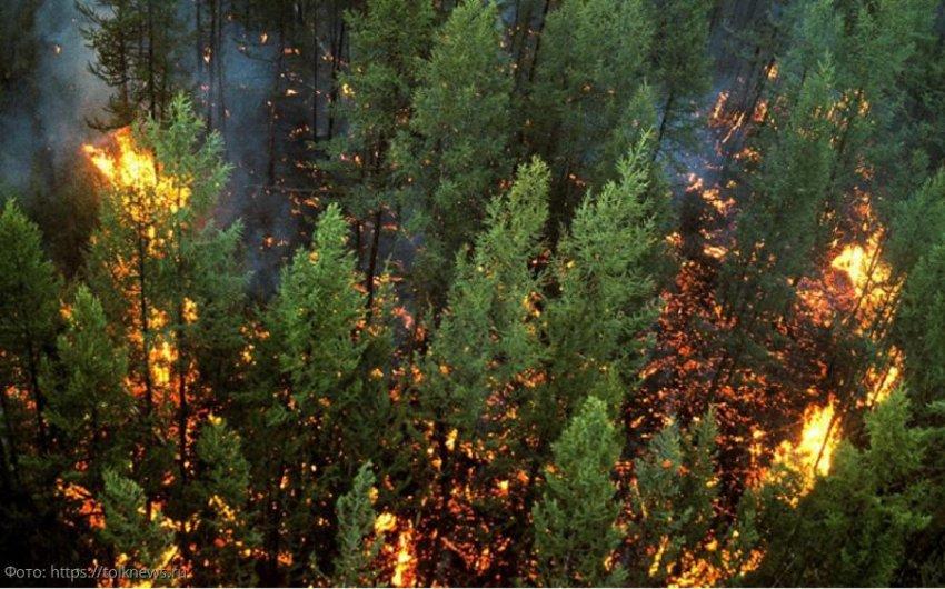 Требуется изменить Лесной кодекс РФ