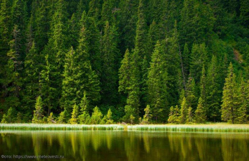 В Красноярске завершилась Всероссийская конференция, посвященная сохранению лесов